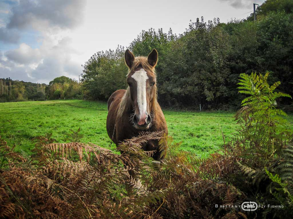 Ambiance-automne-Elorn-BrittanyFlyFishing-32