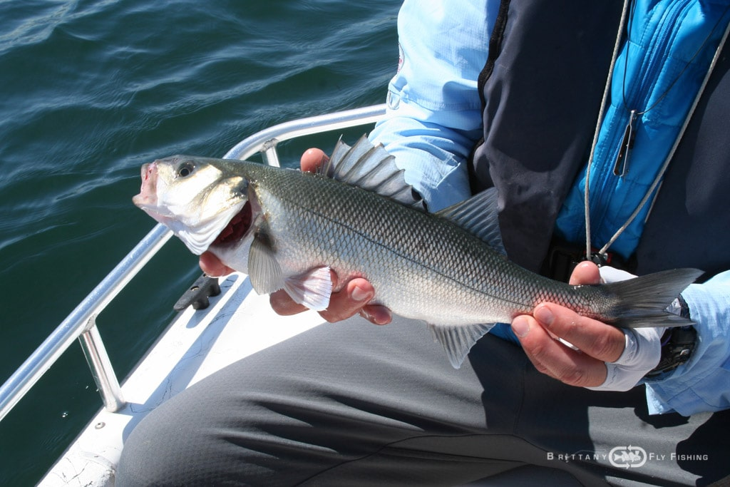 Baie-de-Morlaix-Brittany-Fly-Fishing-8