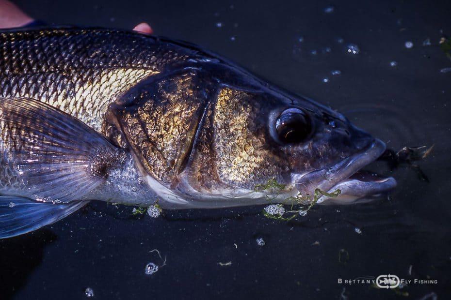 Pêche à la mouche en mer