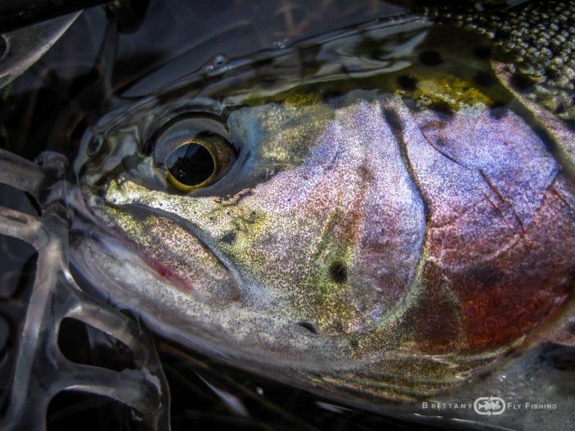 Pêche à la mouche en lac