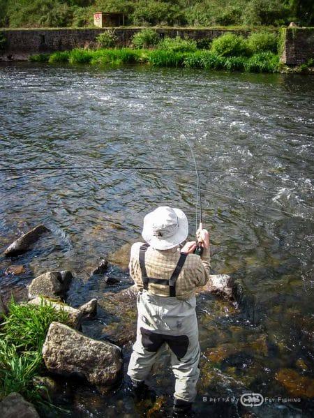 Pêche à la mouche de l'Alose