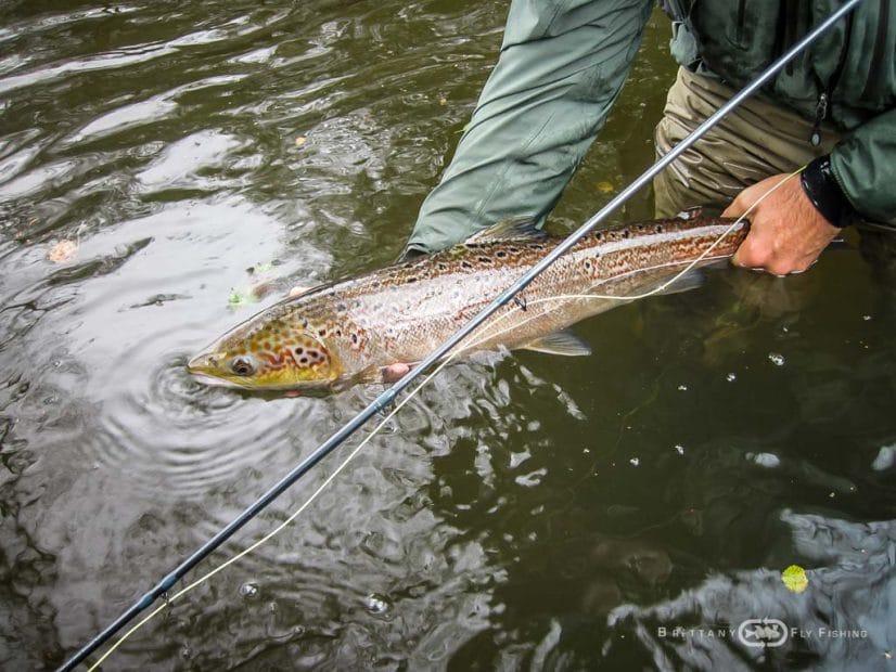 Guidage Pêche à la mouche du Saumon