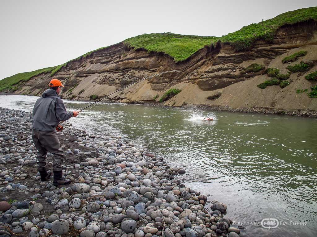 Alaska hoodoo brittany fly fishing for Alaska fly fishing