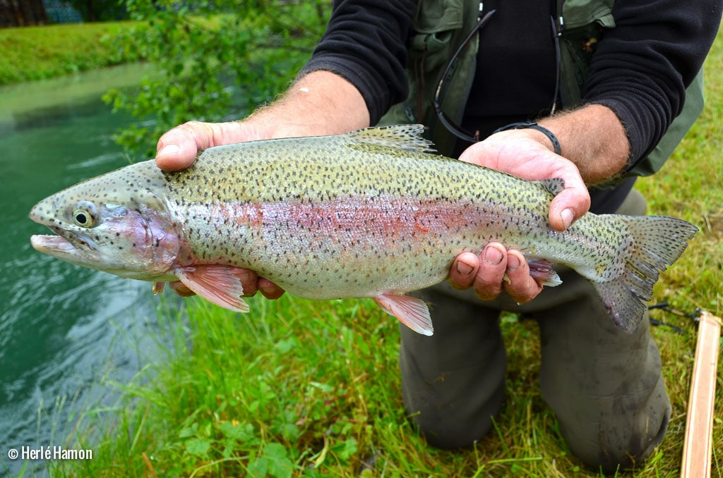 Germany Trauns | Brittany Fly Fishing