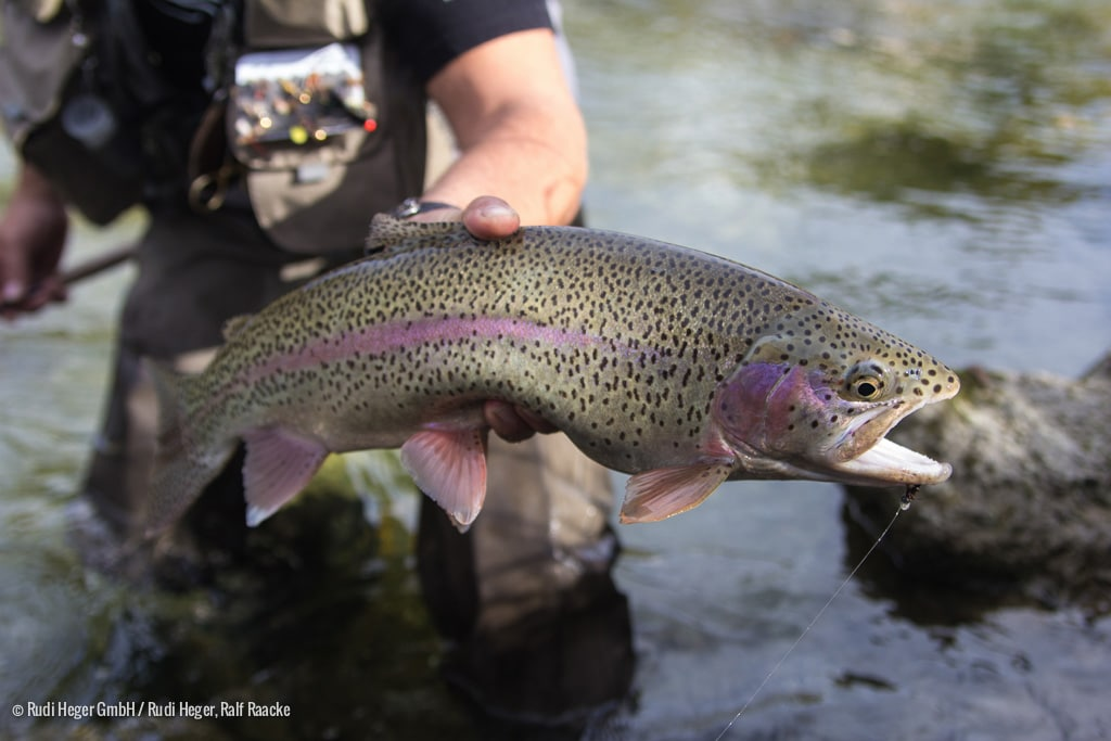 Voyage-Allemagne-Brittany-Fly-Fishing-6-2