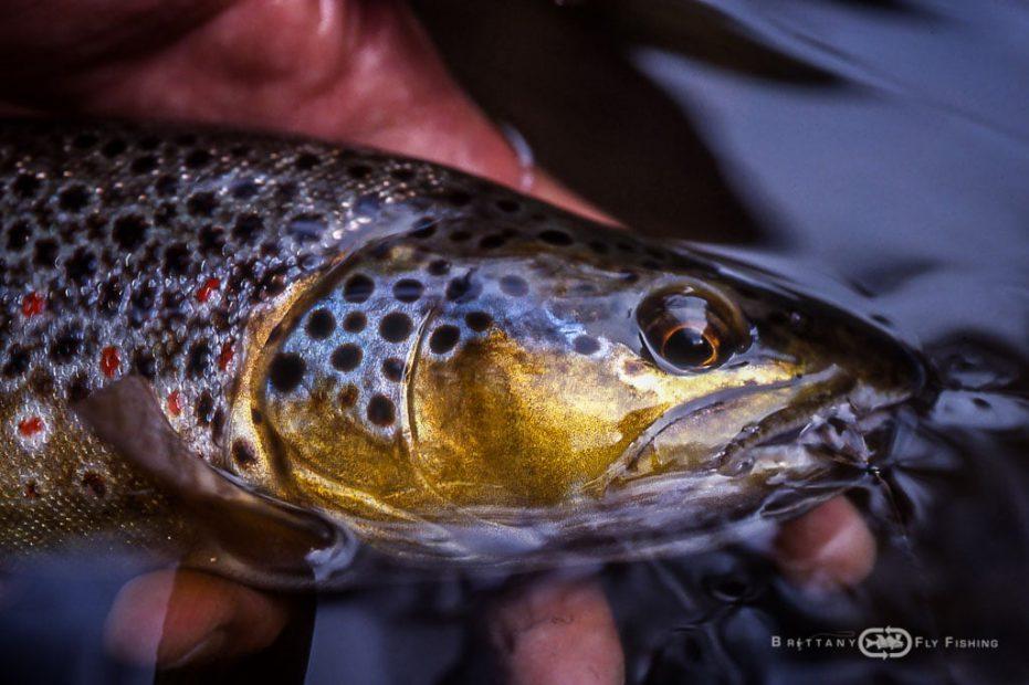 Pêche à la mouche du Jaudy et du Guindy