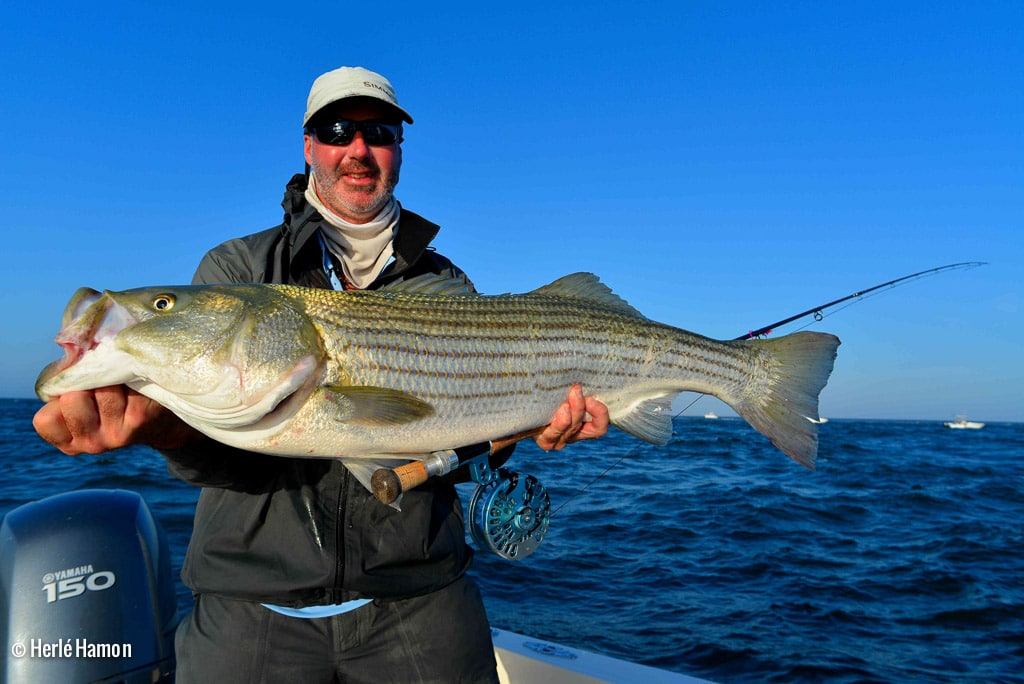 Usa cape cod brittany fly fishing for Fly fish usa