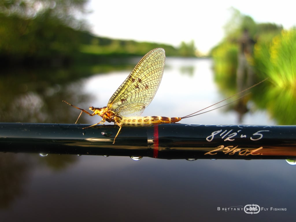 Fliegenfischer-Guide-Brittany-Fly-Fishing-3