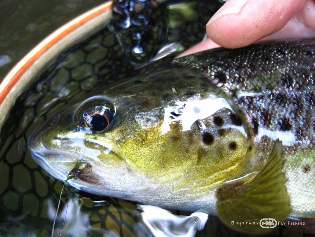 Fliegenfischer-Guide-Brittany-Fly-Fishing-5