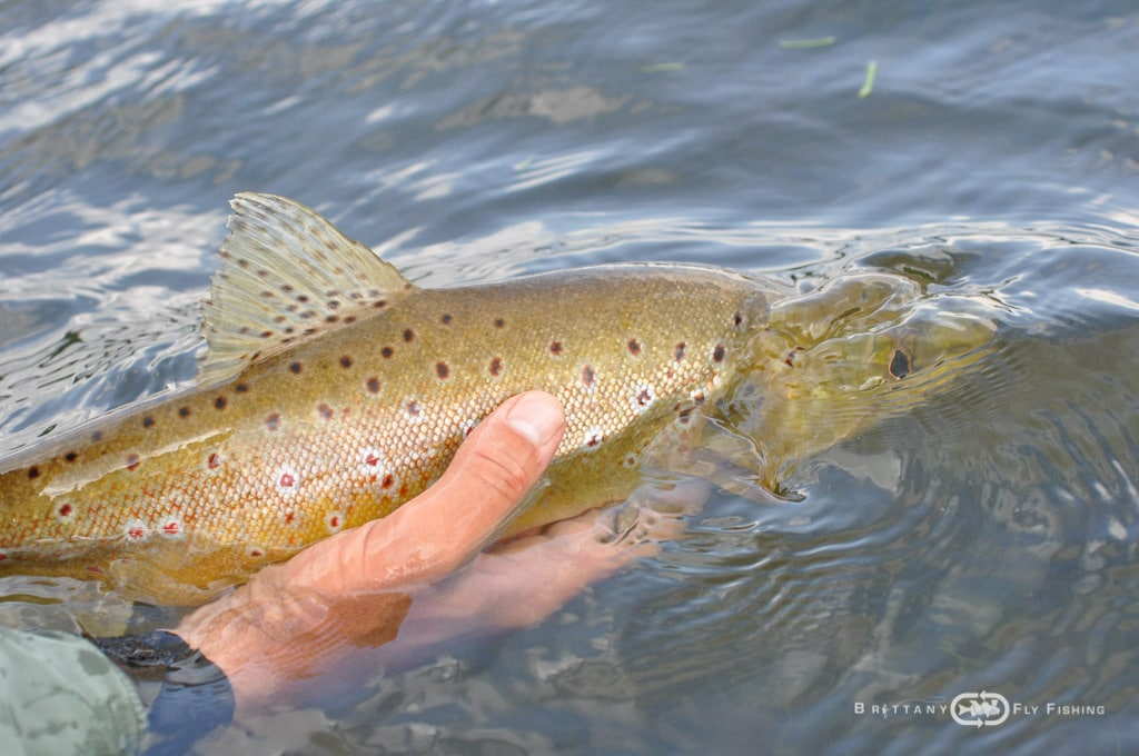 Fliegenfischer-Guide-Brittany-Fly-Fishing-6