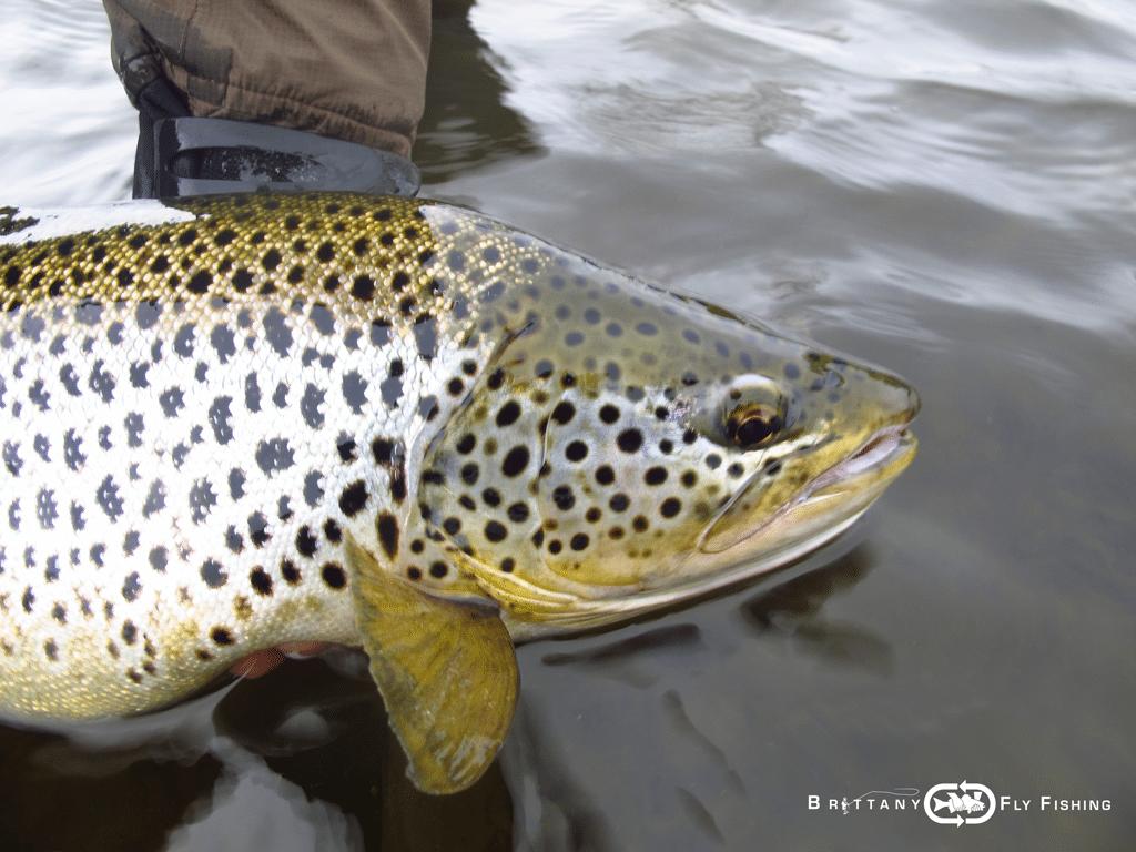 67-lough-sheelin-fly-fishing