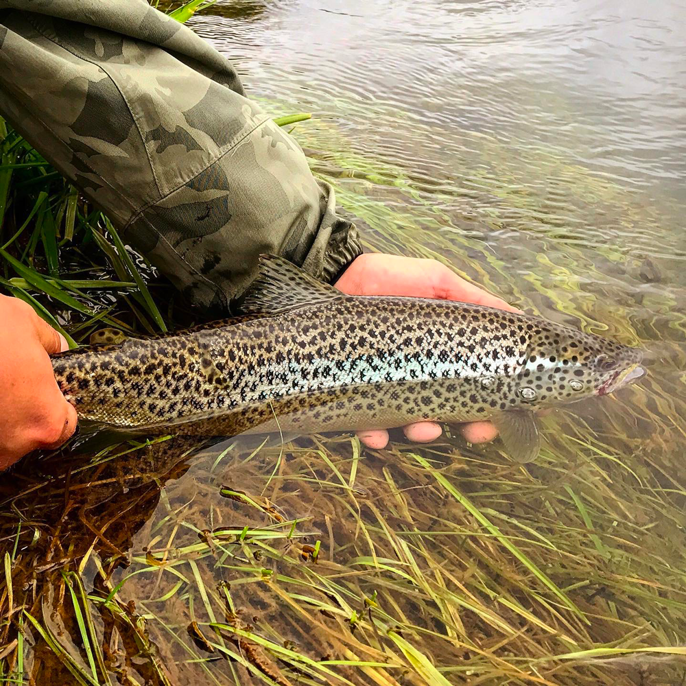 31-iceland-rekjadalsa-laxa-brittany-fly-fishing