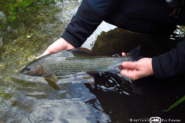 04-uk-angleterre-voyage-fly-fishing-ombre-grayling
