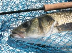 Baie de Morlaix  – Coef 81/78: début de saison encourageant