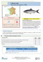 PDF-Alose