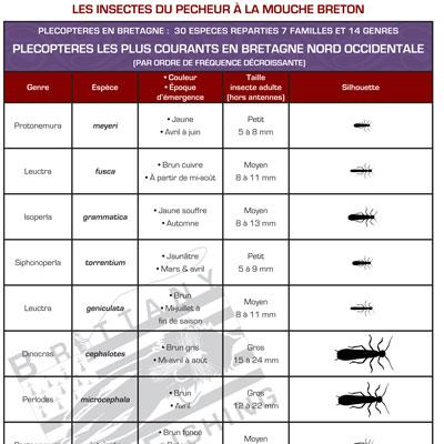 Tableau-Plecopteres